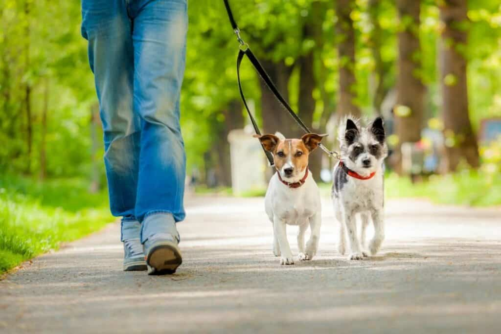 Walking dogs is a great way to earn money with lots of flexibility. It's very likely to make $1000 quickly by serving just a few customers a day.