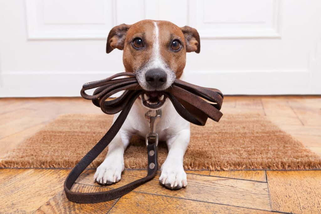 Walking dogs for a company like Rover, or on your own can be a way to make $100 a day on your own schedule.
