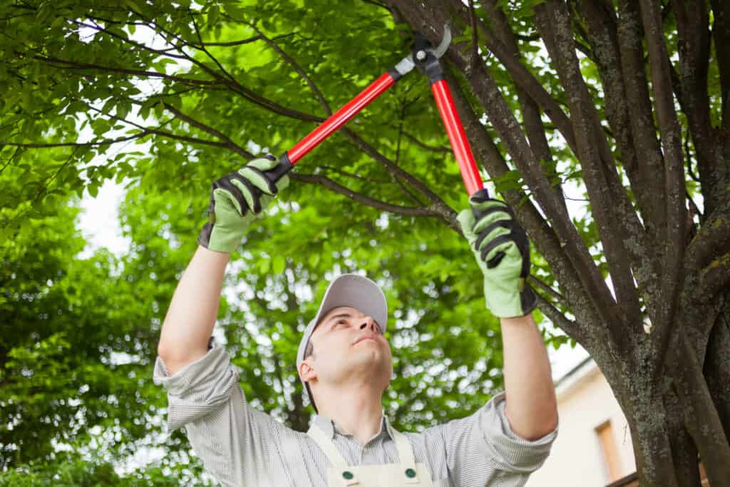 As you're getting your home ready for winter, check the trees around the house for break off, damaging your home or car.